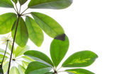 Green plants on a white background — Stock Photo