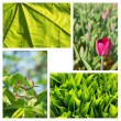A collage of decorative plants — Stock Photo