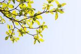 Sunny leafs — Stock Photo
