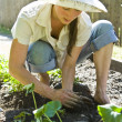 Young woman gardening. - Stock Photo