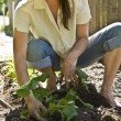 Stock Photo: Young womgardening.