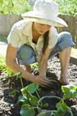 Young woman gardening. — Stock Photo
