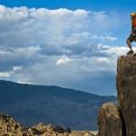Rock climber nearing the summit. — Stock Photo #5900613