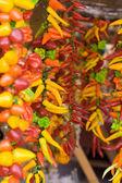 Hängende chilischoten — Stockfoto