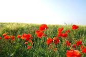 野生の花 — ストック写真