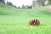Single bump on lawn grass — Stock Photo