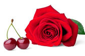 Two sweet cherries and rose — Stock Photo