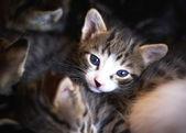Little kitten. — Stock Photo