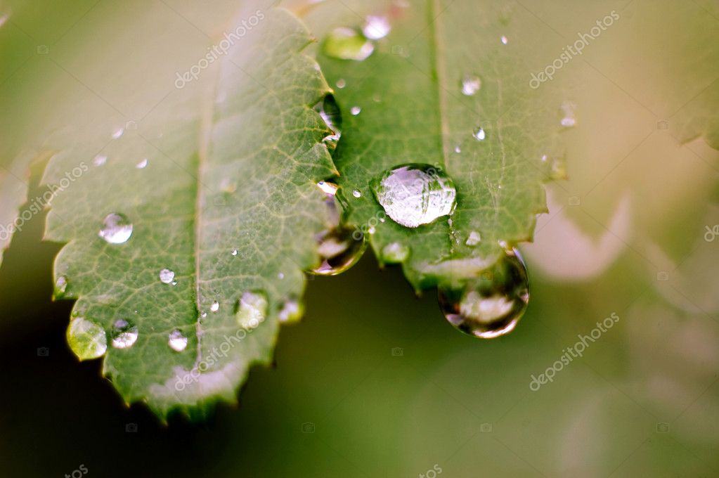 Macro photography of a big water drop. — Stock Photo #6186820