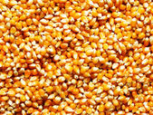 Corn kernels — Stock Photo