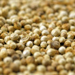 Stock Photo: Coriander seeds