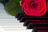Keyboard with a rose — Stock Photo