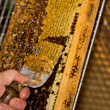 A honey comb being decapped with a fork — ストック写真