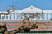 Old Mulberry tree on the background of the Oliy Majlis Senate of — Stock Photo