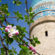 Fruit Tree's blossoms on the background of Chor-minor Minaret in Bukha — Stock Photo