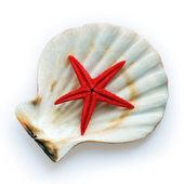 Starfish and shell — Stock Photo