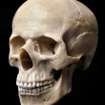 Skull Model — Stock Photo #5995795