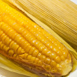 Golden yellow boiled corn — Stock Photo #6376528