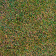 Royalty-Free Stock Photo: Not perfect grass texture