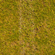 Grass field with white line — Stock fotografie