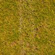 campo de hierba con línea blanca — Foto de Stock