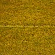 Grass field with white line — Stockfoto