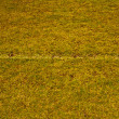 Grass field with white line — ストック写真