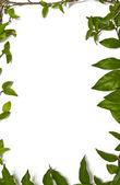 Around corner green leaves frame — Stock Photo