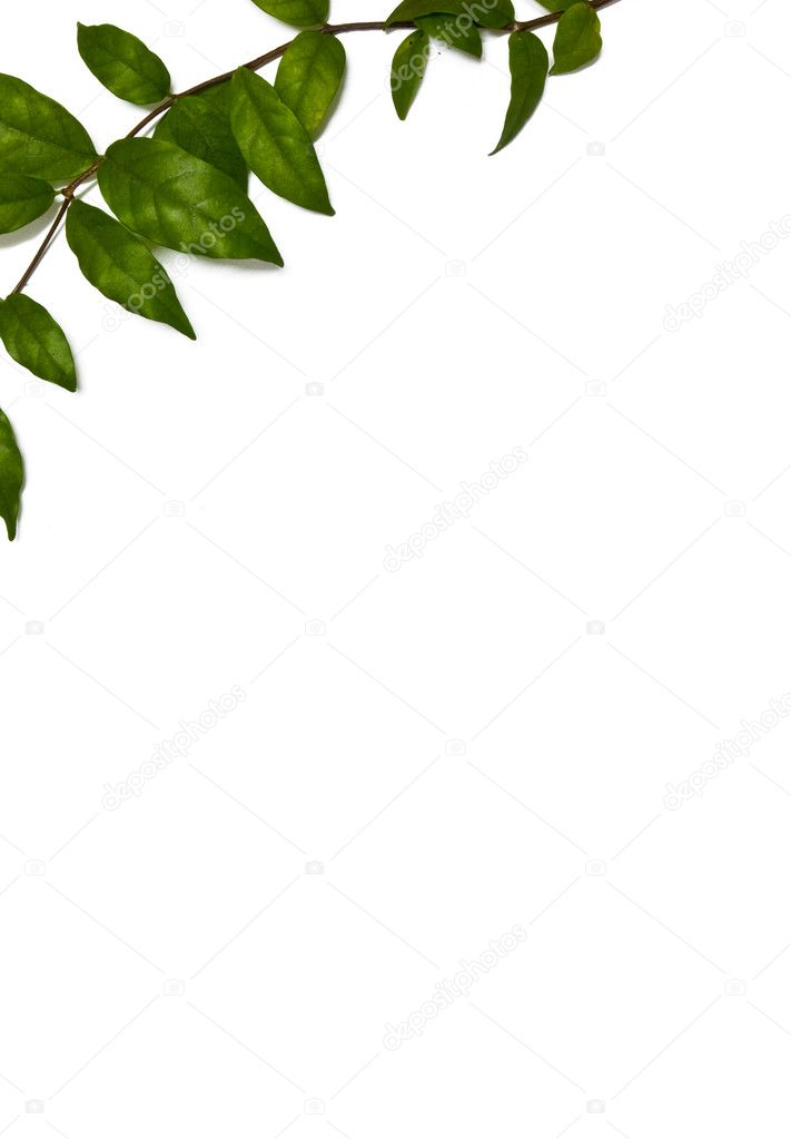 Top left corner green leaves frame — Stock Photo #6376399