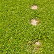 Rock walk path in grass field - Stock Photo