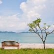Rest bench and the tree at shore — Stock Photo