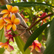 Stock Photo: Orange plumeria flowers on the tree
