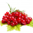 Stock Photo: Fresh red currant isolated on white background