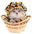 Stock Photo: Funny kitten in a basket isolated on white