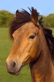 Portrait of a brown horse outdoors with green nature background. — Stock Photo