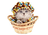 Funny kitten in a basket isolated on white — Stock Photo