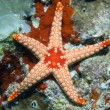 Royalty-Free Stock Photo: Orange starfish.