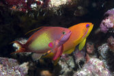 Colorful tropical fish underwater. — Stock Photo