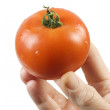 Holding a Tomato — Stock Photo