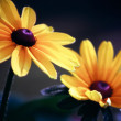 Daisies — Stock Photo #5853580