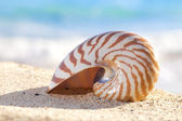 Nautilus shell on a beach sand, against sea waves, shallow dof — Stock Photo