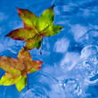 Fall leaves on the rain in a puddle — Stock Photo #5612310