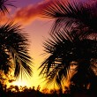 Palmtrees  silhouette on sunset in tropic,horizontal — Stock Photo