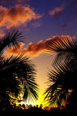 Palmtrees silhouette on sunset in tropic — Stock Photo