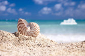 Nautilus shell on beach white boat and blue tropical sea — Stock Photo