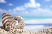 Nautilus shell on a caribbean beach — Stock Photo