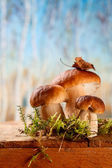 Still life with white boletus mushrooms on wooden box — Stock Photo