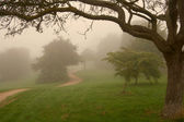 Morning english fog in a park, warm light — Stock Photo