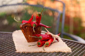 Rode pepers peper in gebogen houten schaal in een tuin — Stockfoto