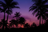 Palmtrees silhouette on sunrise in tropic — Stock Photo